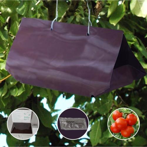 Kit PheroNorm® Mineuse de la tomate - piège Delta