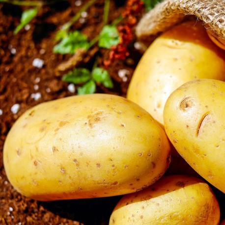 PheroNorm® - PheroNorm® Teigne de la pomme de terre - Andermatt France