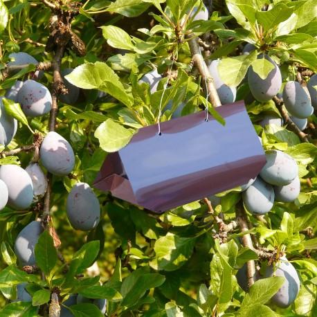 Pièges phéromones - Kit PheroNorm® Carpocapse des prunes - Andermatt France