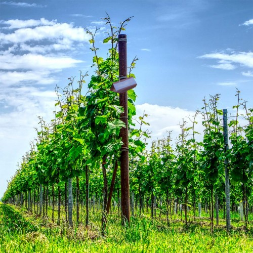 Kit PheroNorm® Eudémis de la vigne