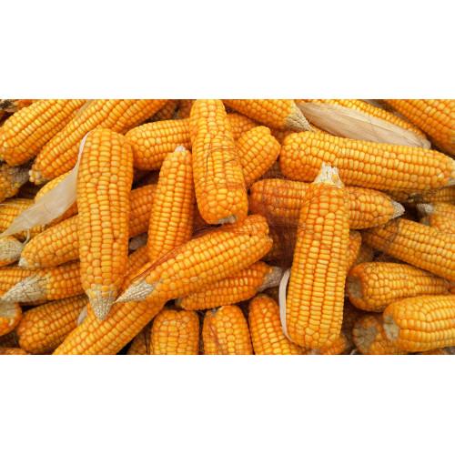 PheroNorm® - Ver de l'épi de maïs