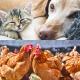Protections des animaux contre puces et poux rouges