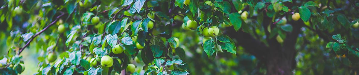 Arboriculture fruitière et culture légumière - Andermatt-France