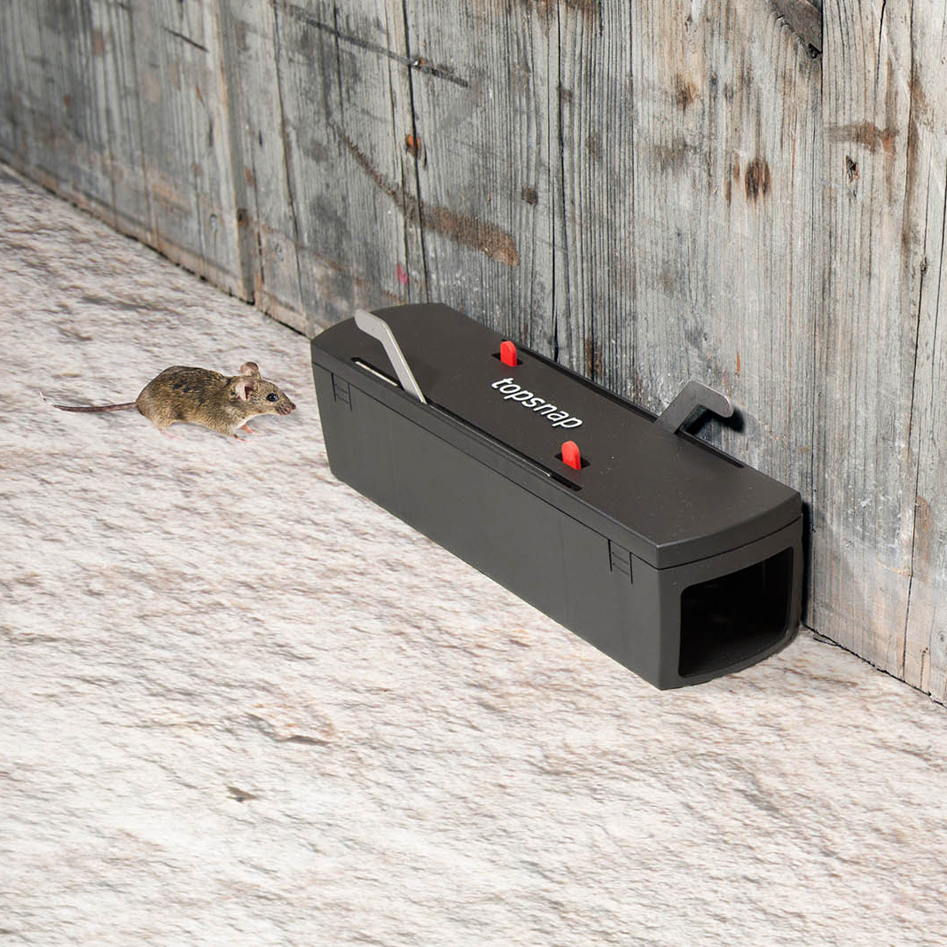 lutte contre souris