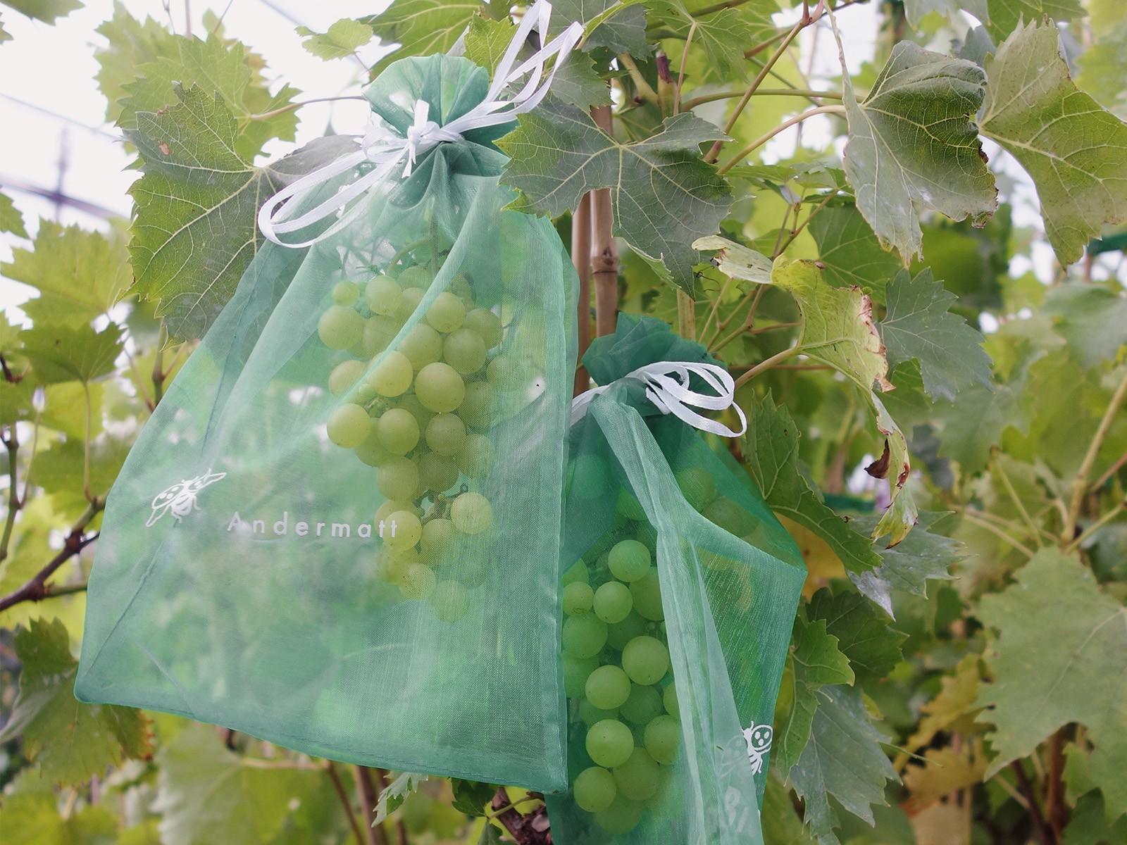 Sachets raisin